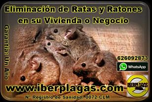 eliminar ratas y ratones en alicante, eliminar ratas y ratones en murcia, eliminar ratas y ratones en torrevieja, eliminar ratas y ratones en toledo
