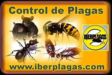 desinfecciones, desratizaciones, desinsectaciones, control de plagas, tratamientos de termitas, tratamientos de carcoma, plagas de jardin