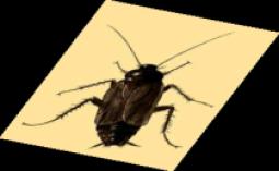 control de plagas en torrevieja, control de plagas en alicante, control de plagas en murcia, control de plagas en toledo, control de plagas en san pedro del pinatar