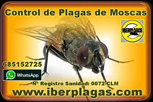mosquitos en torrevieja, eliminar mosquitos en san pedro del pinatar, eliminar mosquitos en alicante, eliminar mosquitos en murcia, eliminar mosquitos en toledo