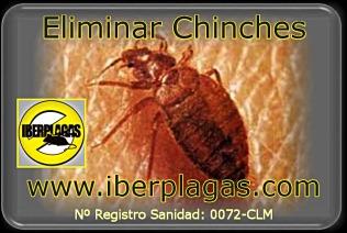 Eliminar Chinches de cama en Alicante