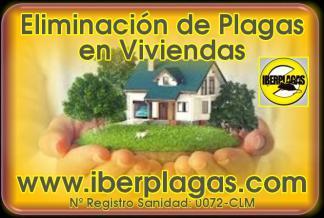 Control de Plagas en Alicante y Murcia