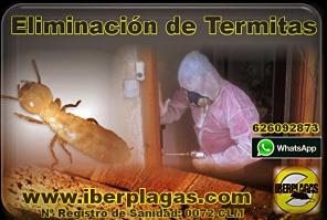 eliminar termitas en Alicante y Murcia