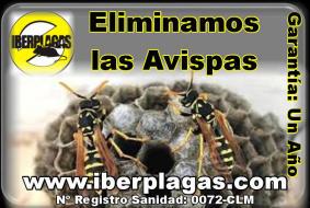Eliminación de avisperos en Alicante y Murcia