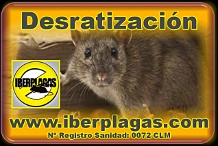 Eliminar ratas en Alicante y Murcia
