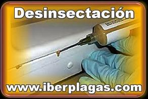 Desinsectación en Alicante y Murcia
