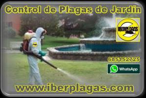 Fumigar piscinas en Alicante y Murcia