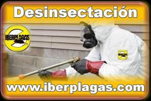 Eliminar insectos en Alicante y Murcia