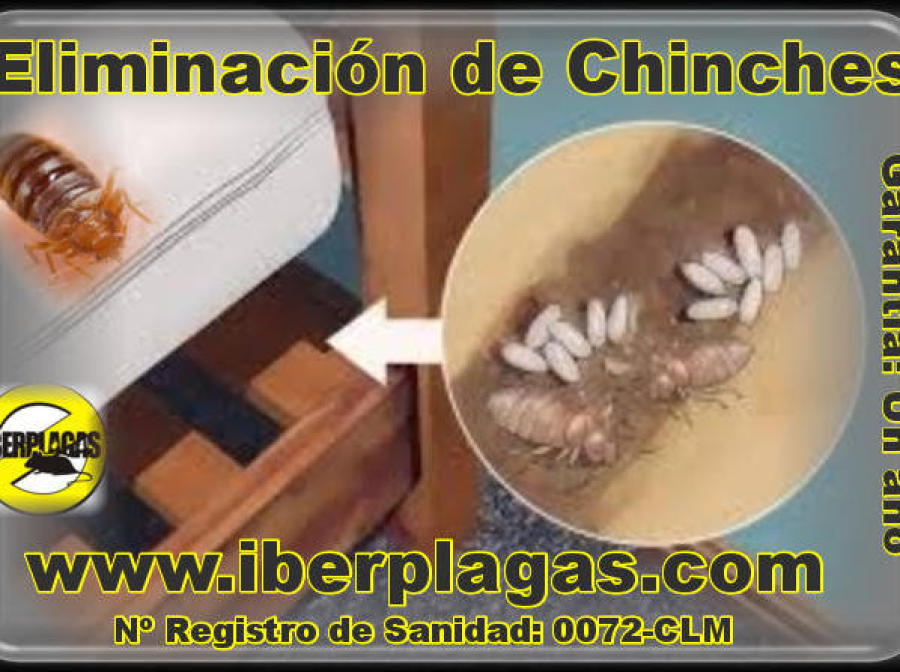Chinches de cama