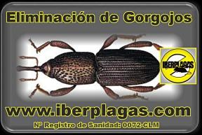 Eliminar Gorgojos en Alicante y Murcia