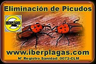 Eliminar Picudo Rojo en Alicante y Murcia