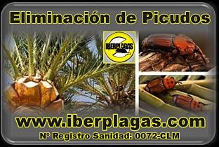 Eliminar Plagas de las palmeras