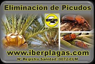 Eliminación de Picudos de las palmeras en Alicante y Murcia