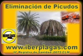 Control de plagas de picudos en Alicante y Murcia