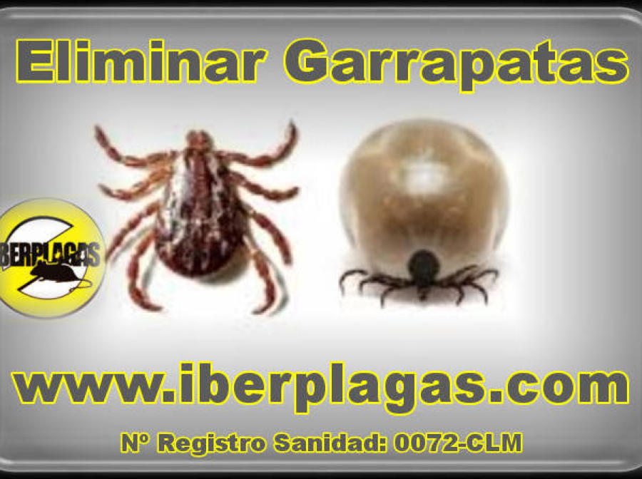 Garrapatas