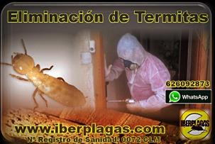 Empresa para eliminar termitas