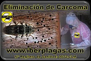 Eliminar carcoma en Alicante y Murcia