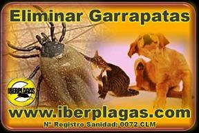 eliminar garrapatas en Alicante y Murcia