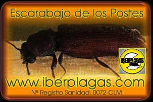 Eliminar Escarabajo de los postes