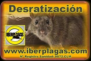 Desratización en Alicante y Murcia