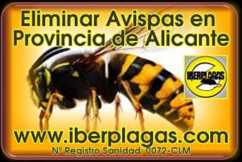 eliminar avisperos en Alicante