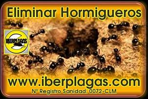 Eliminar hormigueros
