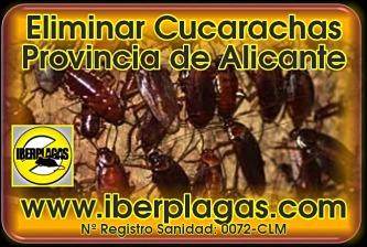 Eliminar cucarachas en Alicante