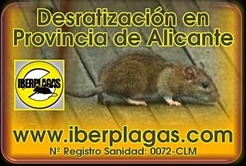 Desratización en Alicante