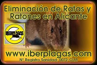 Eliminar ratas y ratones en Alicante