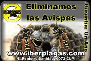 Eliminar avispas en Murcia