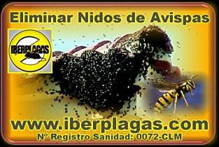 Eliminar avisperos en Murcia