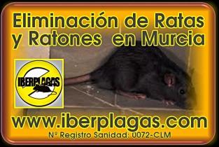Eliminar ratas en Región de Murcia