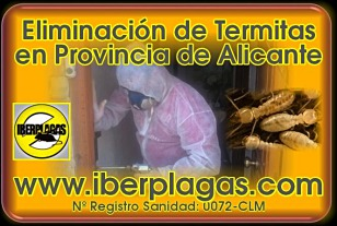 Eliminar termitas en Alicante
