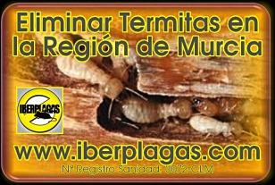 eliminar termitas en Murcia