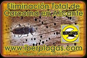 Eliminar carcoma en Alicante
