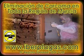 Eliminar carcoma en Murcia