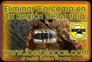 Eliminar la Carcoma en la Región de Murcia