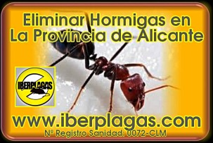 eliminar hormigas en Alicante