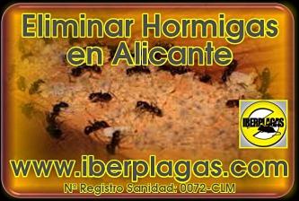 fumigación de hormigas