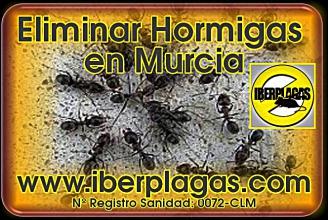 eliminar hormigas en Murcia
