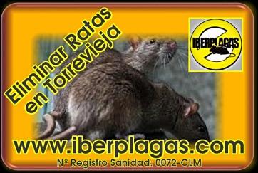 Eliminar Ratas en Torrevieja