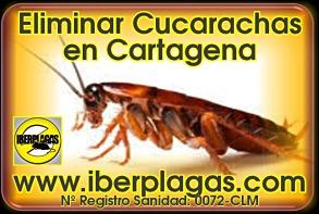 Eliminar cucarachas en Cartagena