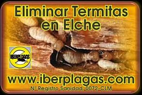 Eliminar termitas en Elche