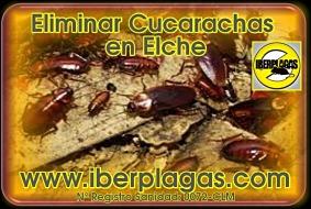 Eliminar cucarachas en Elche