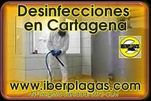 Desinfecciones en Cartagena