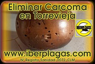 Eliminar Carcoma en Torrevieja