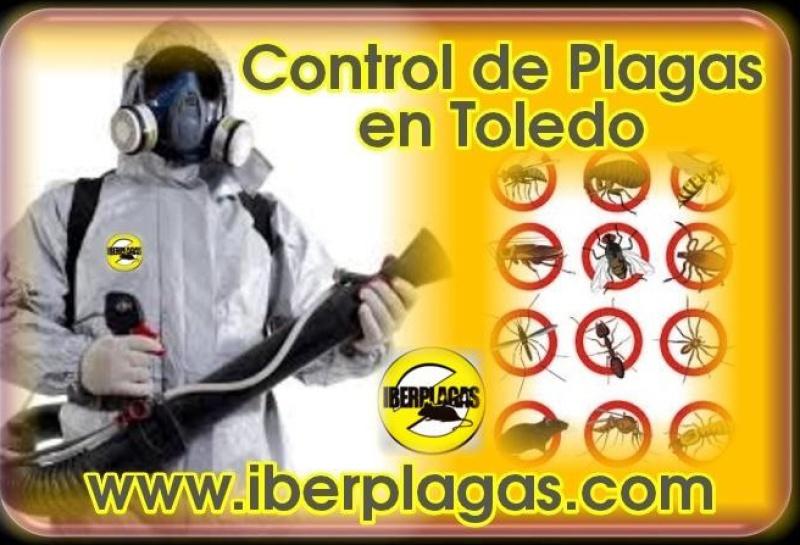 Control de plagas en Toledo