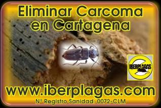 Eliminar Carcoma en Cartagena