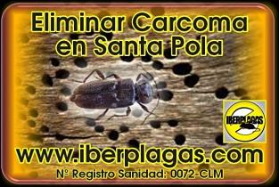 Eliminar Carcoma en Santa Pola
