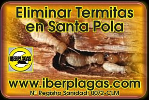 Eliminar termitas en Santa Pola